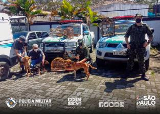 Polícia Militar resgata aves e cães
